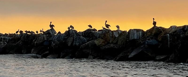 Break Wall with pelicans<br /> Huntington Harbor, California<br /> January 9, 2021