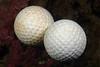 Golfballs_140111b