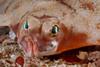 Flatfish: ID needed