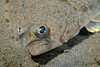 Flatfish: ID needed