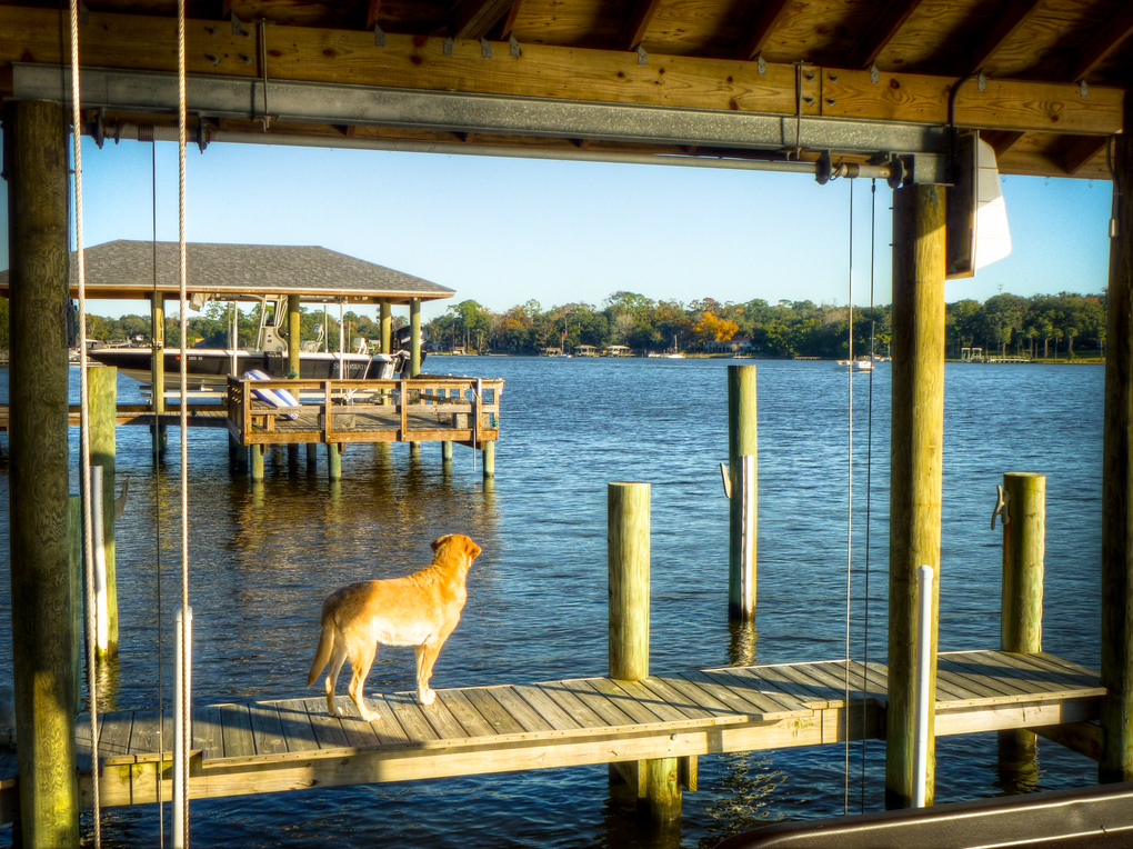 dog st johns river jacksonville