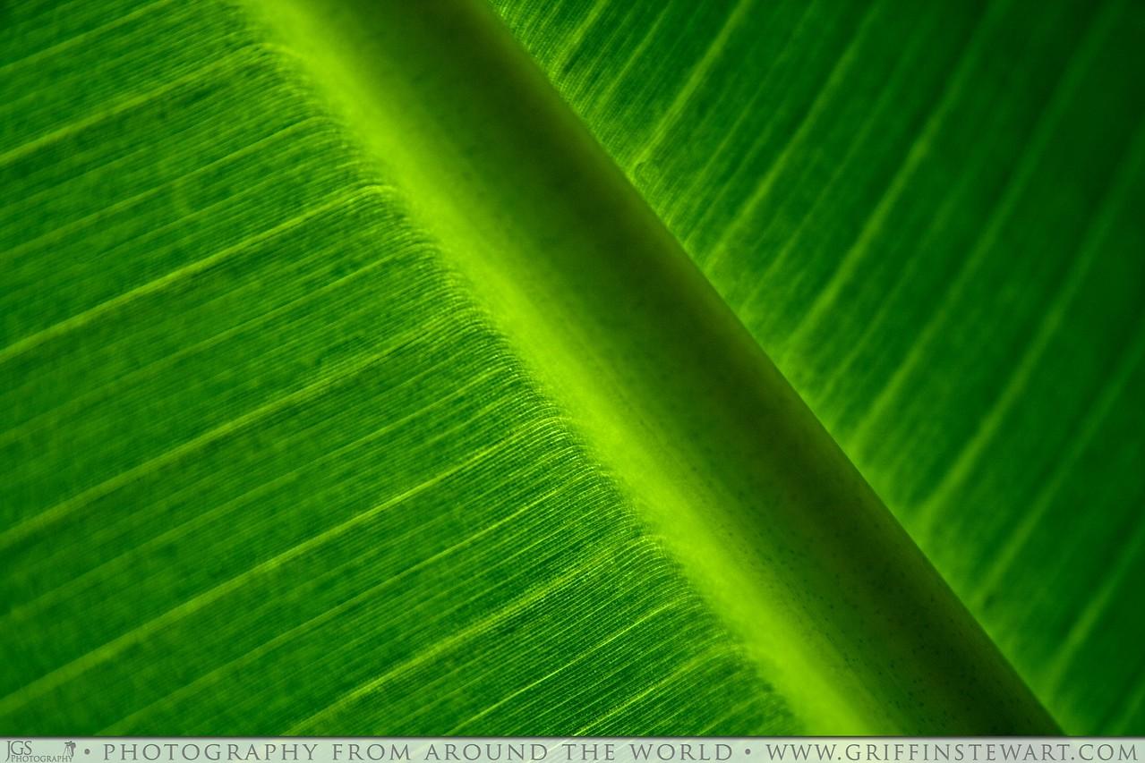 www.griffinstewart.com, green, spring, light