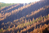 Fire Damage<br /> Meriweather Fire<br /> Helena National Forest