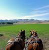 Gage and Maverick<br /> Hilger Ranch