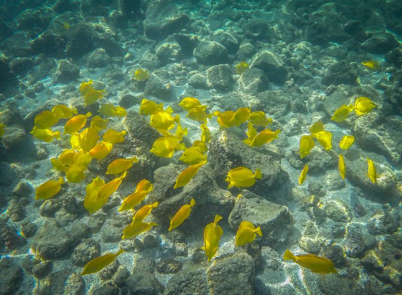 Snorkeling in Kahuluu Bay