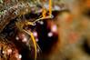 Crab: Hermit Crab<br /> Catalina Island, California