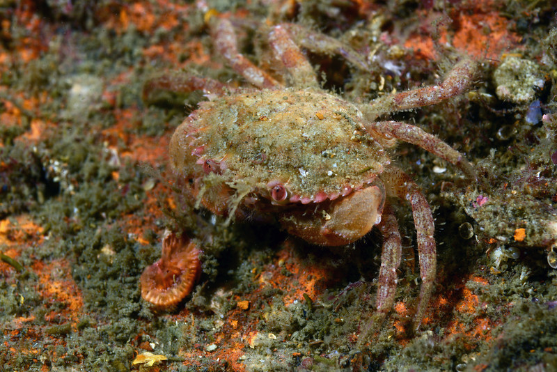 Crab: <br /> Redondo Barge, California