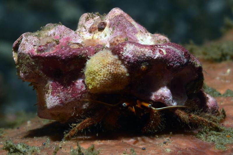 Crab: <br /> The Barge, Redondo Beach, California