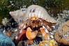 Crab: ID needed<br /> T-Pier, Morro Bay, California