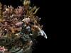 Crab: Loxorhynchus grandis, Sheep Crab