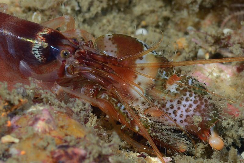 Shrimp<br /> The Barge, Palos Verdes, California