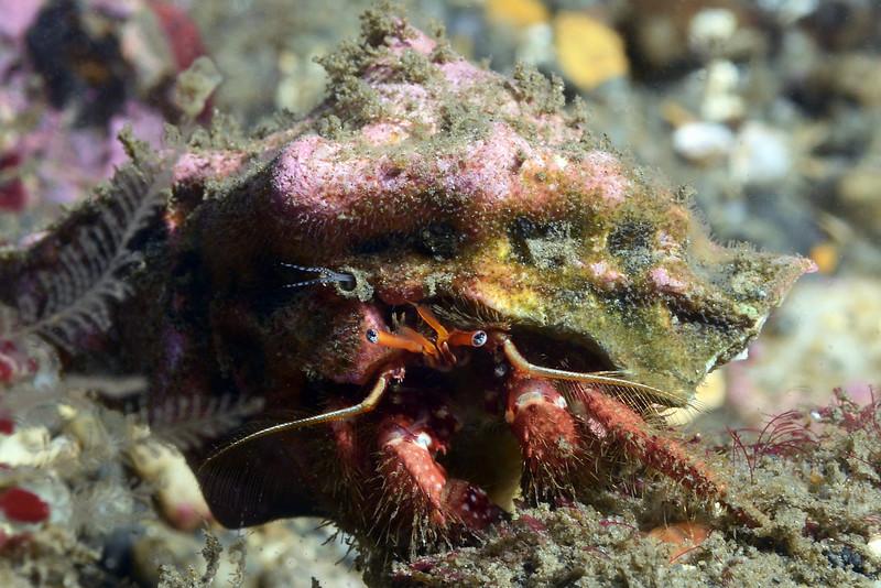 Crab:<br /> The Barge, Redondo Beach, California