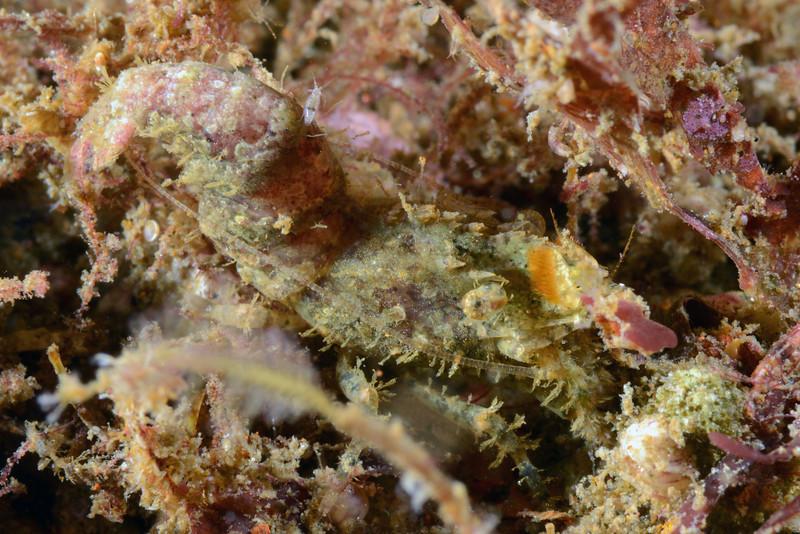 Shrimp: ID needed<br /> The Barge, Redondo Beach, California