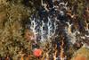 Sea Cucumbers<br /> Pt. Vicente, Palos Verdes, California