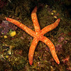 Star, ID needed<br /> Blue Cavern, Catalina Island, California