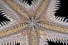 Star: Astropecten armatus/verrilli, Spiny Sand Star, ventral view