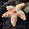 Star<br /> T-Pier, Morro Bay, California