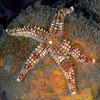 Star ID needed<br /> Malibu, California