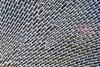 Bryozoan: Membranipora villosa, formerly Membranipora membranacea<br /> Palos Verdes, California