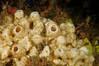 Sponge: ID needed<br /> Camel Head, Pt. Loma, California
