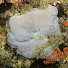 Sponge: ID needed<br /> The Pinnacles, Palos Verdes, California