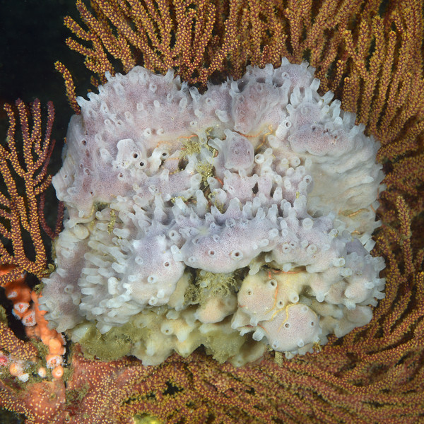 Sponge<br /> Palos Verdes, California
