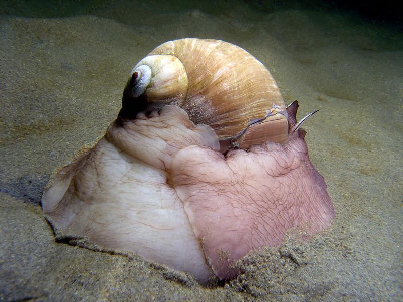 polyplacophora mollusca gastropoda bivalvia polyplacophora diverkevin