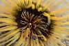 Anemone<br /> Garden Spot, Palos Verdes, California