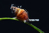 Snail<br /> Willow Cove, Catalina Island, California<br /> January 2, 2021