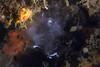 Spawn of unknown animal<br /> Biodome, Palos Verdes, California<br /> October 4, 2020