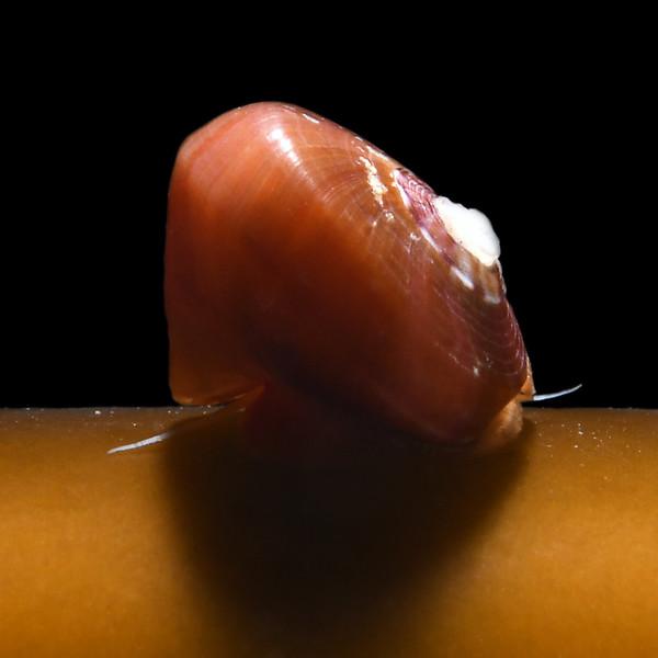 Snail:<br /> Biodome, Palos Verdes, California<br /> October 4, 2020