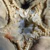 Bat star, ventral perspective<br /> Big Sur, California