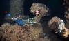 Rockfishes<br /> Wide angle shot with Kraken Wide Conversion Lens<br /> 60', Eureka Oil Rig<br /> March 14, 2021