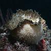 Sponge:<br /> Pt. Loma, California
