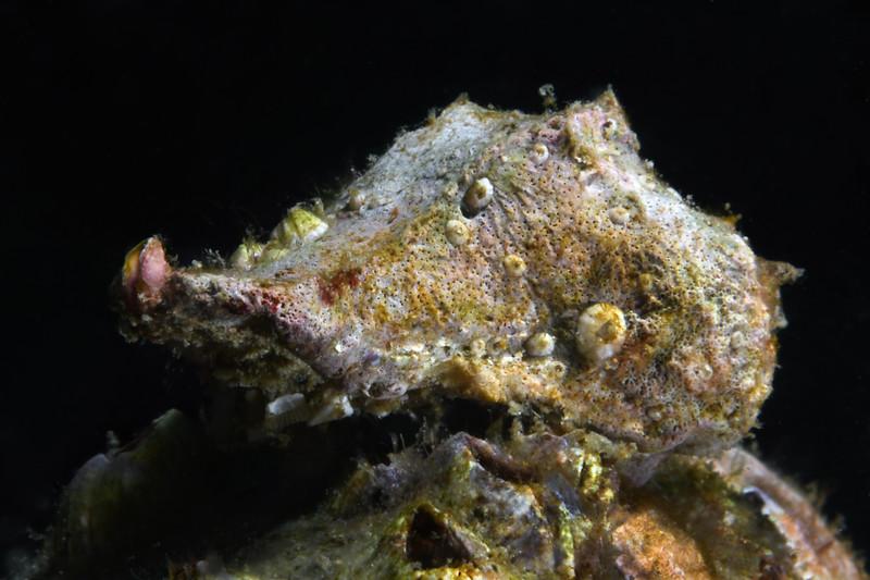 Snail:<br /> Isthmus Reef, Catalina Island, California<br /> November 29, 200