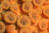 Cliona californiana, sponge, yellow form<br /> La Gringa, Bahia de Los Angeles, Baja, Mexico.