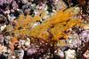 Algae<br /> La Gringa, Bahia de Los Angeles, Baja, Mexico.