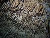 Speleothems<br /> Tajma Ha Cenote
