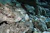 Tajma Ha Cenote