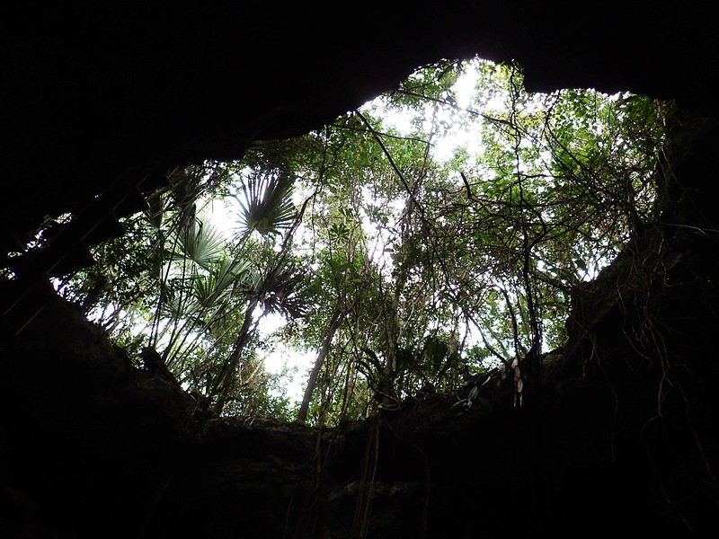 An opening through the ground, midway during our dive <br /> Tajma Ha Cenote
