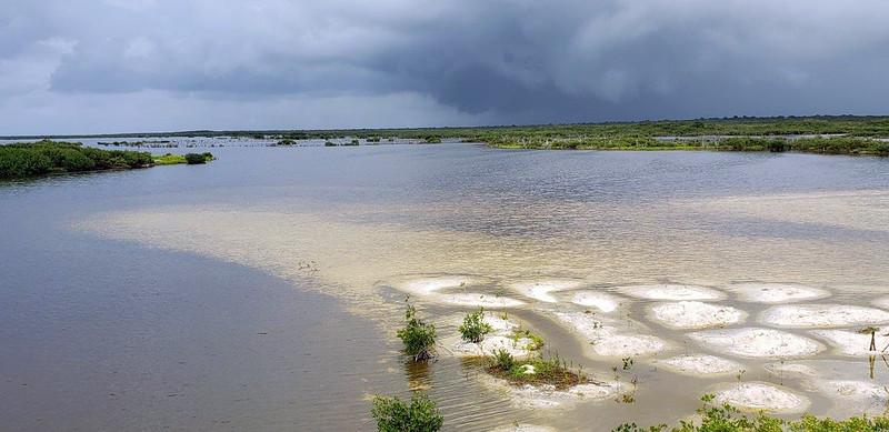 Cozumel lagoon<br /> Photo by Scott Warner