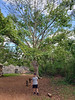 """Kevin under a """"Tree of Life""""<br /> Ek Balam, Mexico<br /> Photo by Scott Warner"""