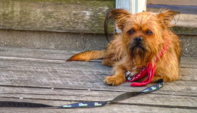 small dog michigan
