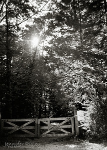 Rowan Oak Gate