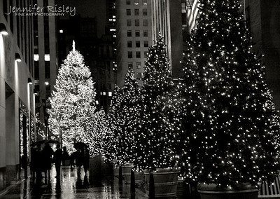 Trees at Rockefeller Plaza
