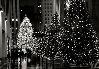 Rockefeller Trees in the Rain