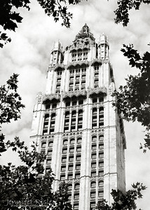 Woolworth Building Through the Trees