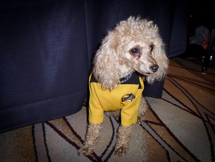 dog starfleet outfit