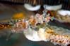 Doto columbiana, British Columbia Doto, with eggs<br /> San Miguel Island, California