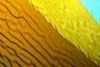 Macrocystis pyrifera, Giant Kelp detail<br /> Merry's Reef, Palos Verdes, California